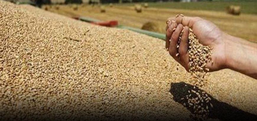 4 مليون دولار لدعم زراعة القمح في المناطق المحررة والمحاصرة في سوريا