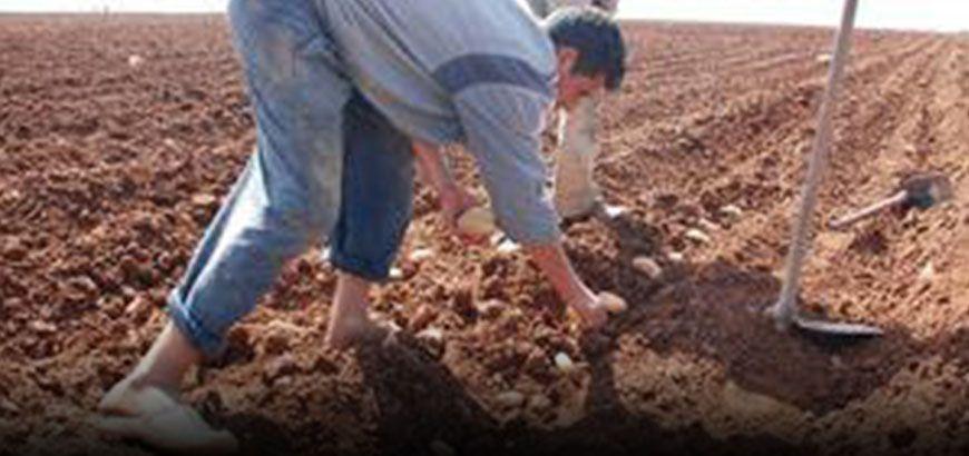 """بدعم من منظمة """"شفق"""" استمرار مشروع مكافحة فأر الحقل في سهل الروج بريف إدلب"""
